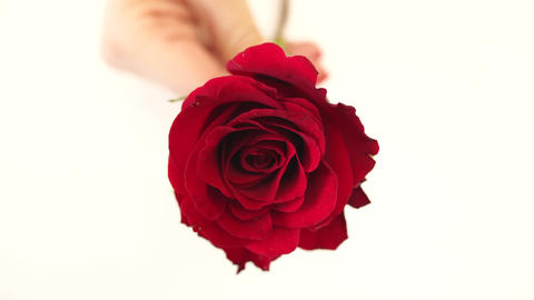 Red rose in hand Image