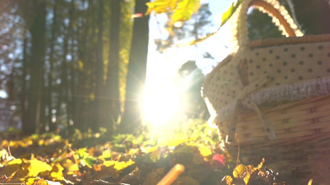 Falling yellow leaves against shining sun and basket. Sunny autumn day. Super ライブ動画