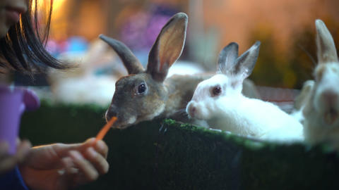 Feeding group of young rabbits with carrot close-up ビデオ