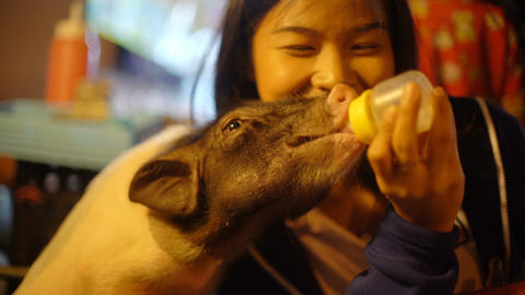Happy Asian Girl feeding piglet with milk from a bottle Footage