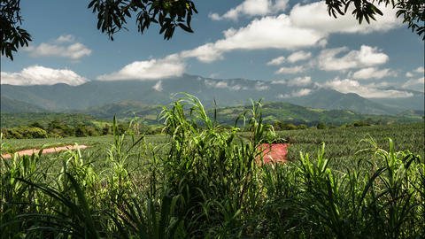 Time Lapse, Buenos Aires Farmland, Costa Rica Live Action