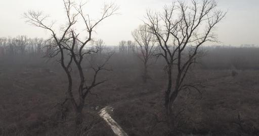 Dead Swamp. Winter, no snow 05a Footage