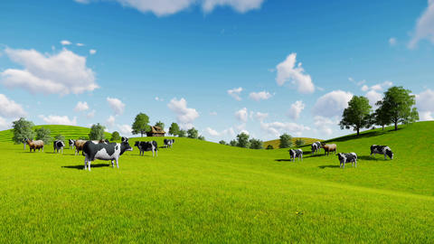 Herd of cows on the green meadows Footage