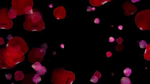 Rose petals CG CG動画