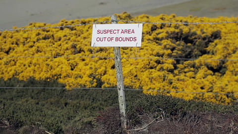 Yorke Bay In Falklands Islands. Landmines Suspect Area Live Action