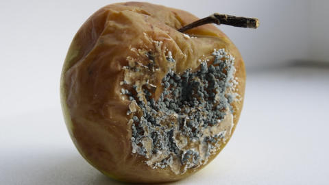 A rotten apple, covered with mold 영상물