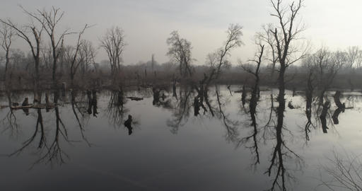 Swamp Winter