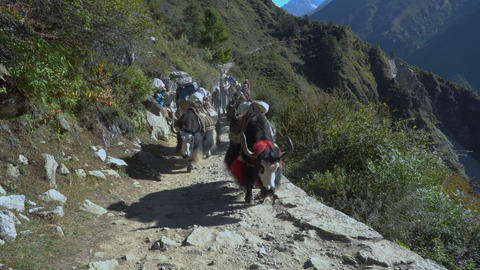 Tourists, porters and yaks on the trail in the Himalayas Footage