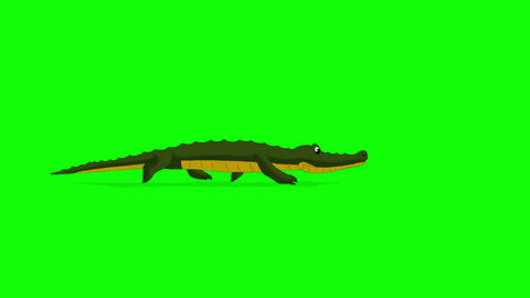 Little Crocodile Runs Chroma Animation