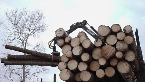 Crane claw lifts up wood logs from truck at sawmill Live Action