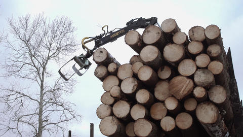 Crane claw unloads lumber logs from truck at sawmill Live Action