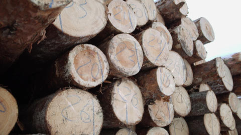 Wood logs pile with numbers markers at sawmill Footage
