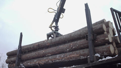 Crane claw unloads wood logs from truck at sawmill Live Action