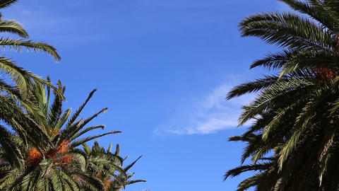 waving palm trees and sky Stock Video Footage