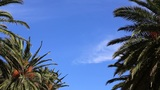 waving palm trees and sky Footage