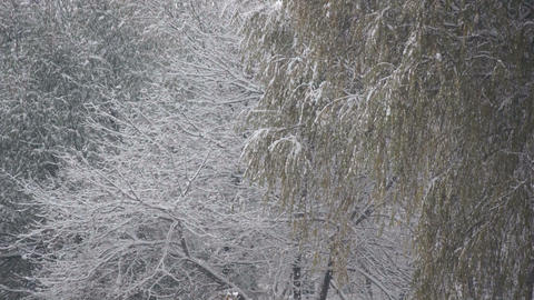 Snowfall 03 Stock Video Footage