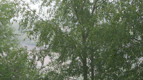 Green trees under the rain Stock Video Footage