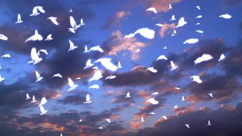 Dove 72357 Stock Video Footage