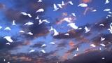 Dove 72357 Animation