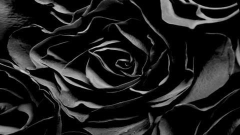 Stil Rose Stock Video Footage