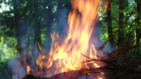 Pile of branches burning in forest Stock Video Footage