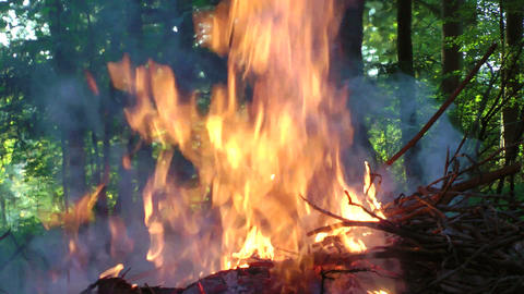 Pile of branches burning in forest Footage