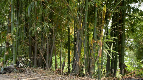 bamboo Stock Video Footage