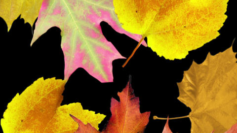 Autumn leaves background. Loop Stock Video Footage