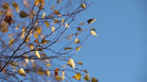 autumn sky Stock Video Footage