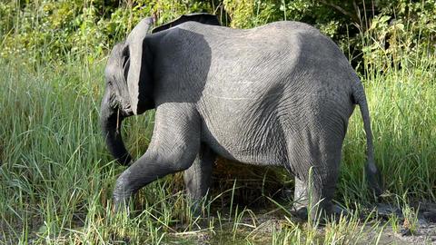 elephant Live Action