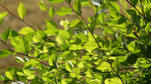 Leaf Stock Video Footage