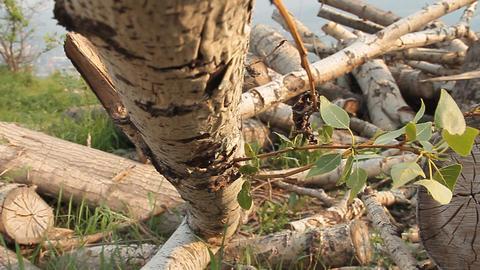 Logs Footage