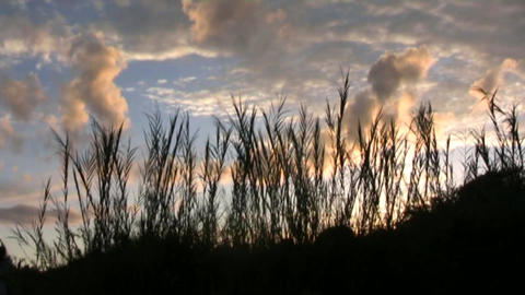 sunset in Africa Stock Video Footage