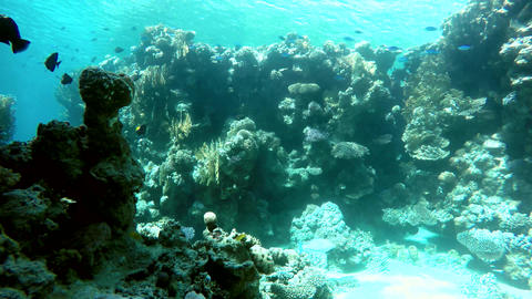 Beautiful coral reef Live Action