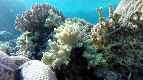 Coral flowers. Colorful corals Footage