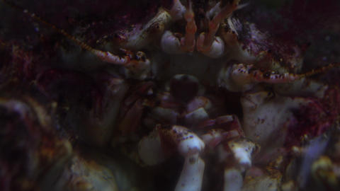 Scary crab head 4K close up video Footage