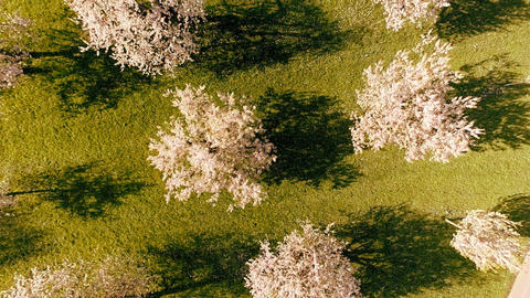 Flying over spring trees silhouette shadows forest trees woods aerial view Footage