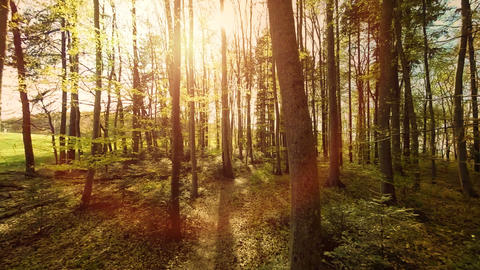 Woods trees plants nature background summertime aerial view forest trees Footage