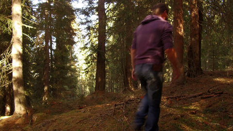 woodcut walks in the woods, Alta Badia, Dolomites Footage