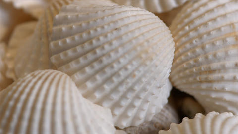 Ribbed shells Footage