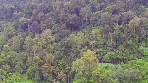 Trees in Thai jungle, aerial video Footage