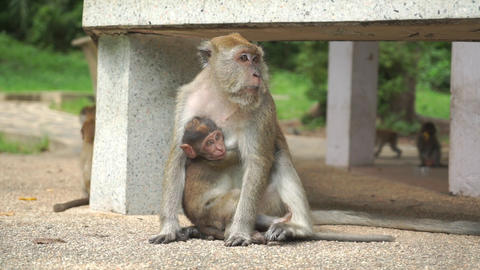 Funny video of monkey mother taking care of her baby Live Action