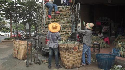 Unloading truck full of pineapples in Bangkok. Medium shot Live Action