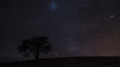 Time lapse of stars sky with milky way moving over old tree silhouette Footage