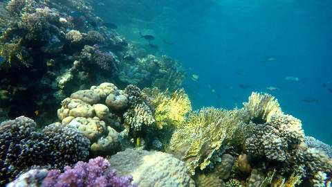 Beautiful coral reef. Life under the water Live Action
