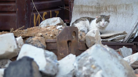 Cat With Cut Ear On A Background Of Rusty Drawers stock footage