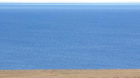 Polar desert shores of Novaya Zemlya and blue Barents sea with abundance birds Footage