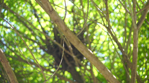 Tree branches with green leaves Footage