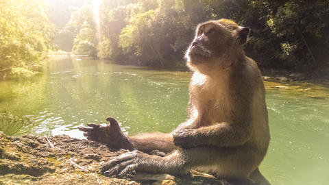 Monkey sitting on a rock looking at the sky by the river in Khao Sok Natural Photo