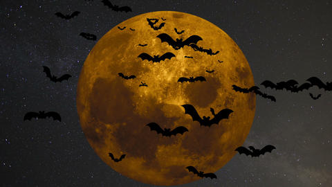 A flock of bats on the background of a large yellow moon 영상물